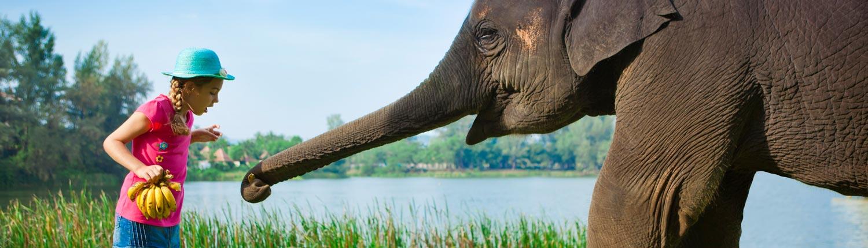 Angsana Laguna Phuket Thailand - Lucky