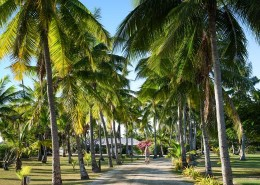 Musket Cove Resort & Marina Fiji - Coconut Avenue